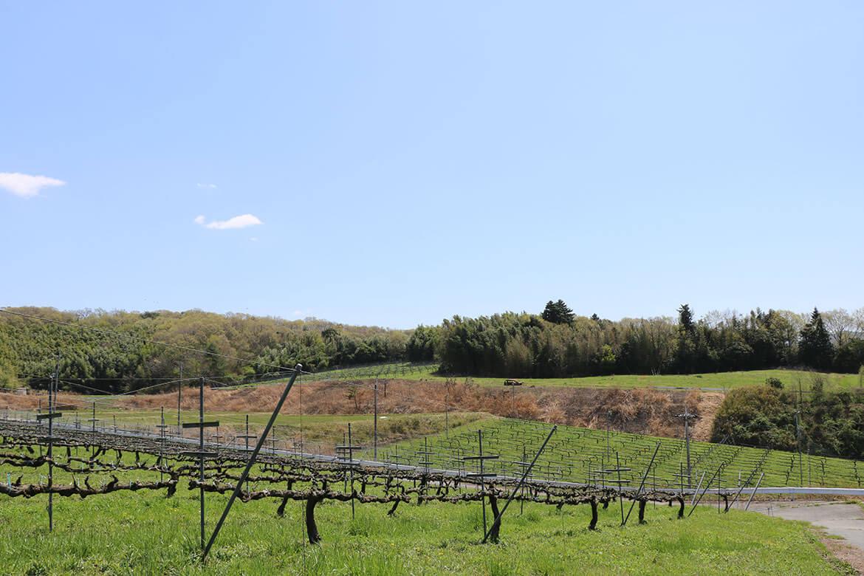 【Wellness Farm Day-はたけの日‐】食べて感じる神戸ワイン!国産リースリング収穫体験@神戸ワイナリー