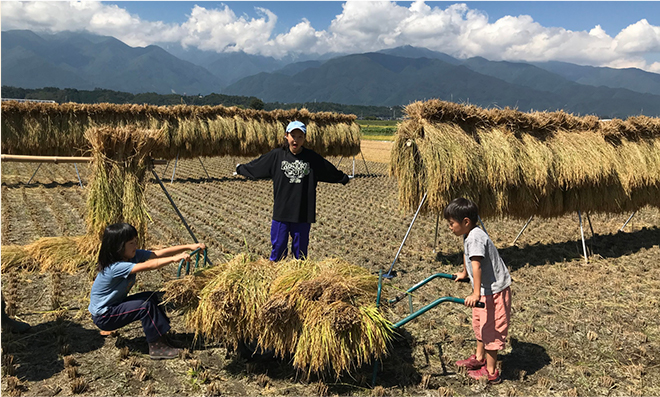 昔ながらの米作り体験【稲刈り編】※サンプル